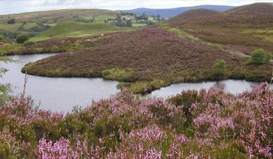 Boorin Nature Reserve