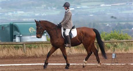 Ballyknock Riding School