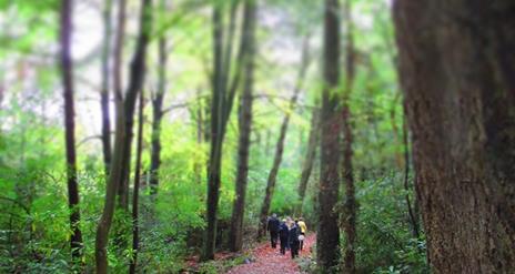 Blessingbourne Woodland Walk