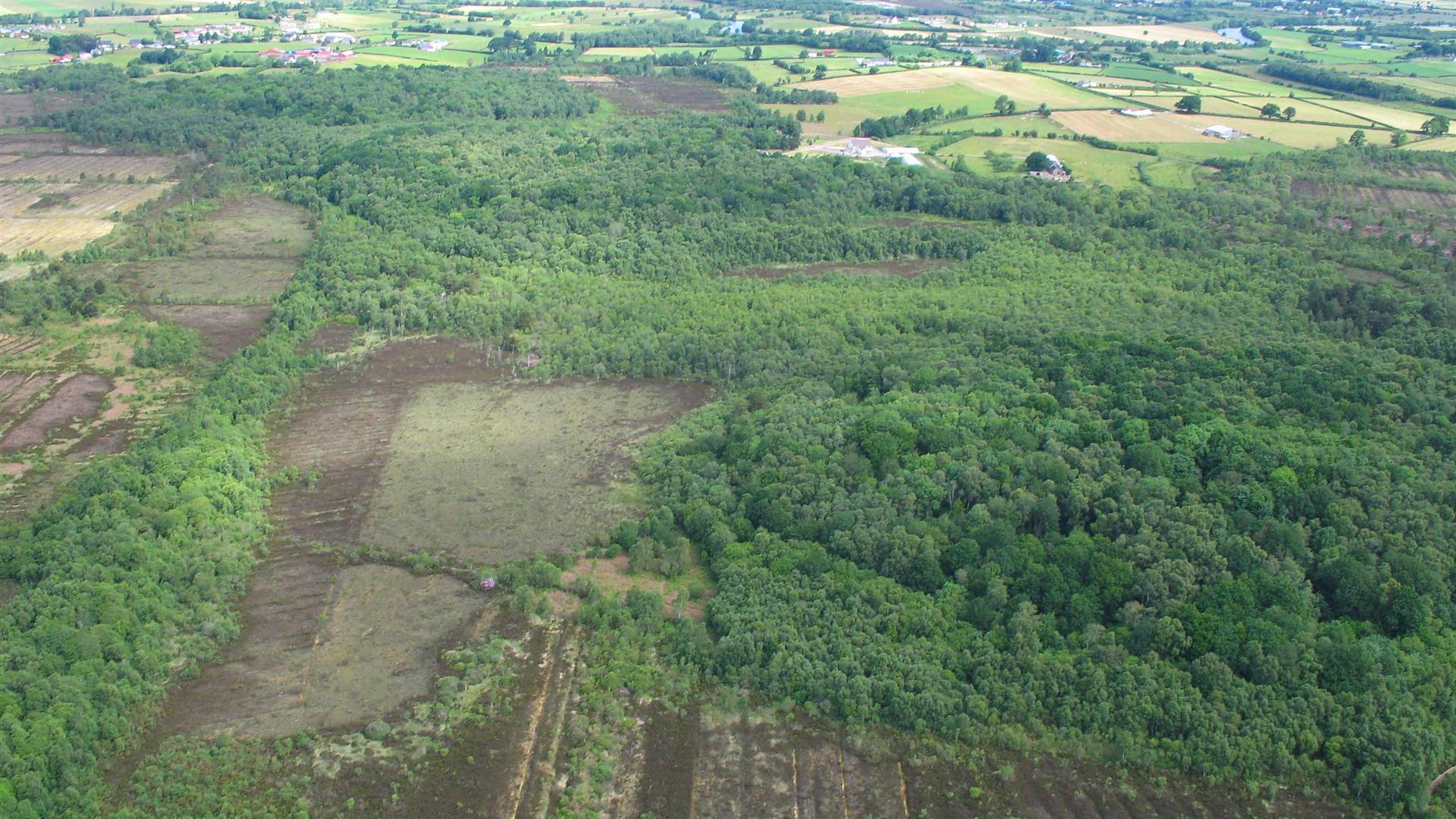Mullenakill & Annagariff Wood Nature Reserves