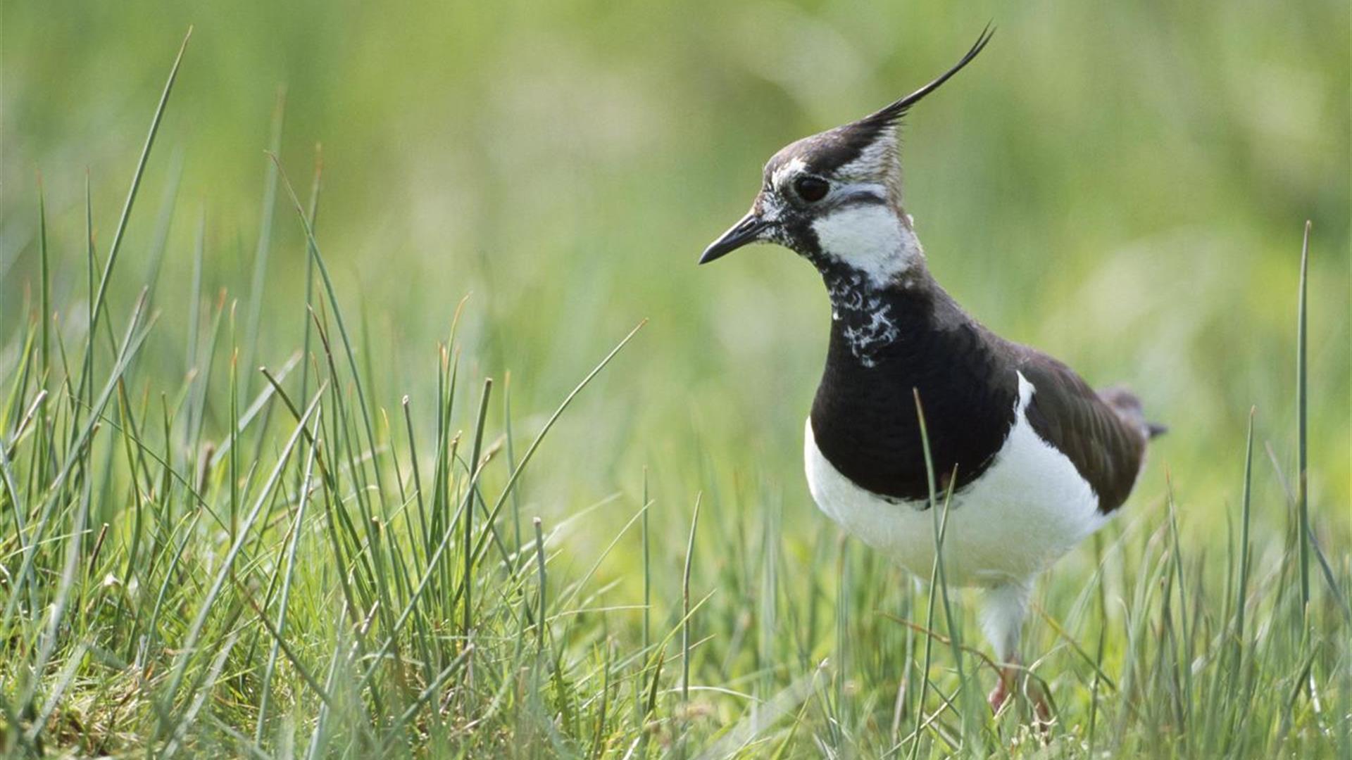 Portmore Lough Nature Reserve