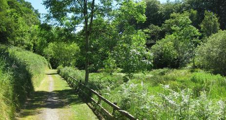 Glenmore Scenic Walk