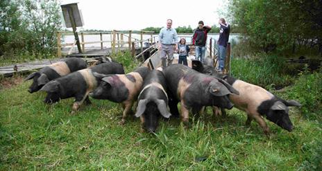 Fermanagh Black Bacon