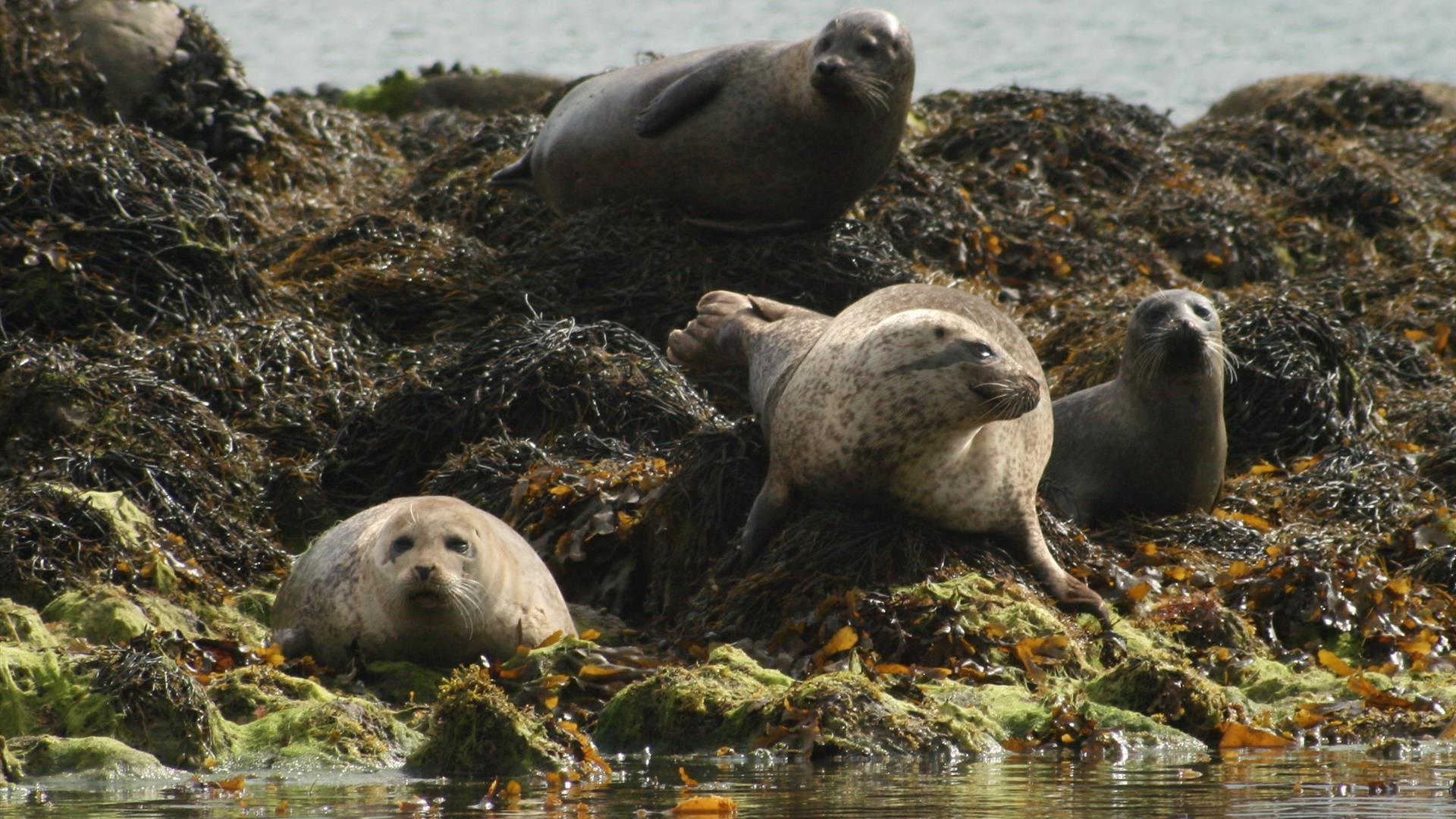 Strangford Lough Lookout