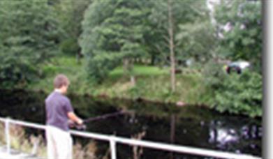 Garvagh Forest