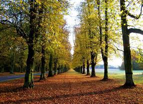 Waldron Effingham | Visit Nottinghamshire