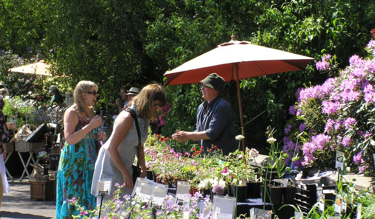 Summer Plant Hunters' Fair at Thoresby Park