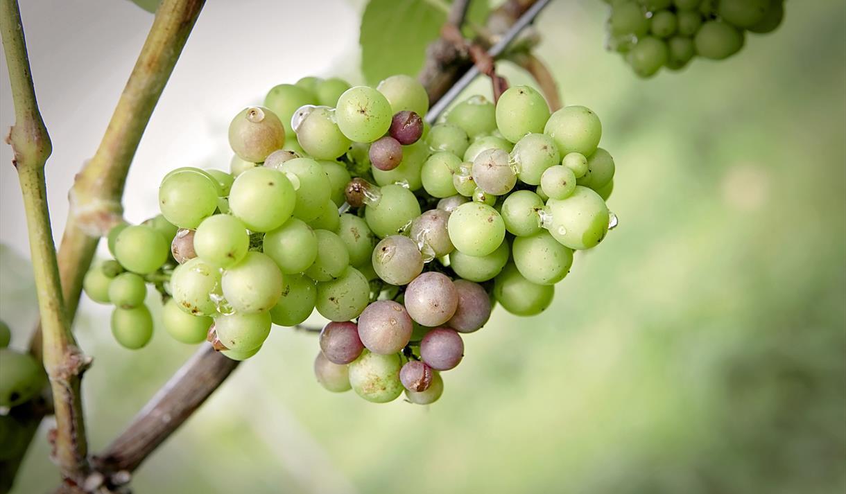 Hanwell Wine Estate - Vineyard Experiences