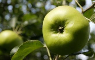 The Bramley Apple Festival of Food & Drink 2021