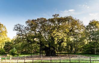 The Major Oak in Sherwood Forest | Visit Nottinghamshire