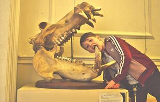 Natural History Museum at Wollaton Hall