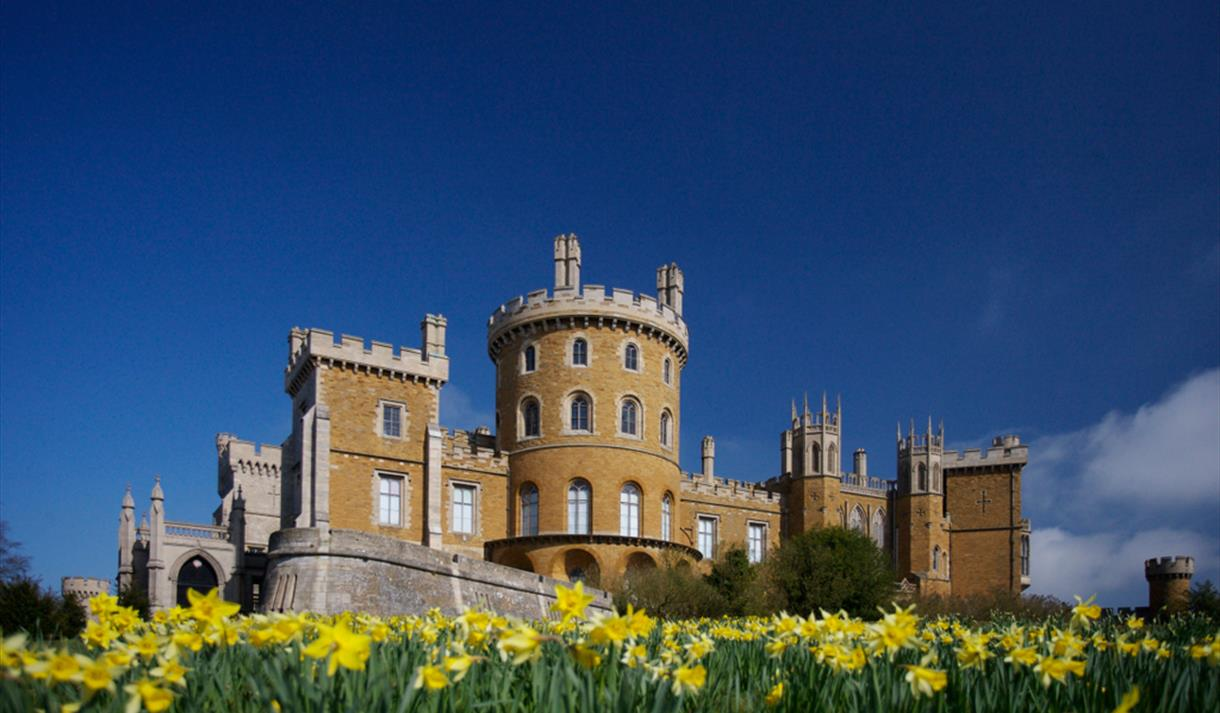 Daffodils at Belvoir Castle