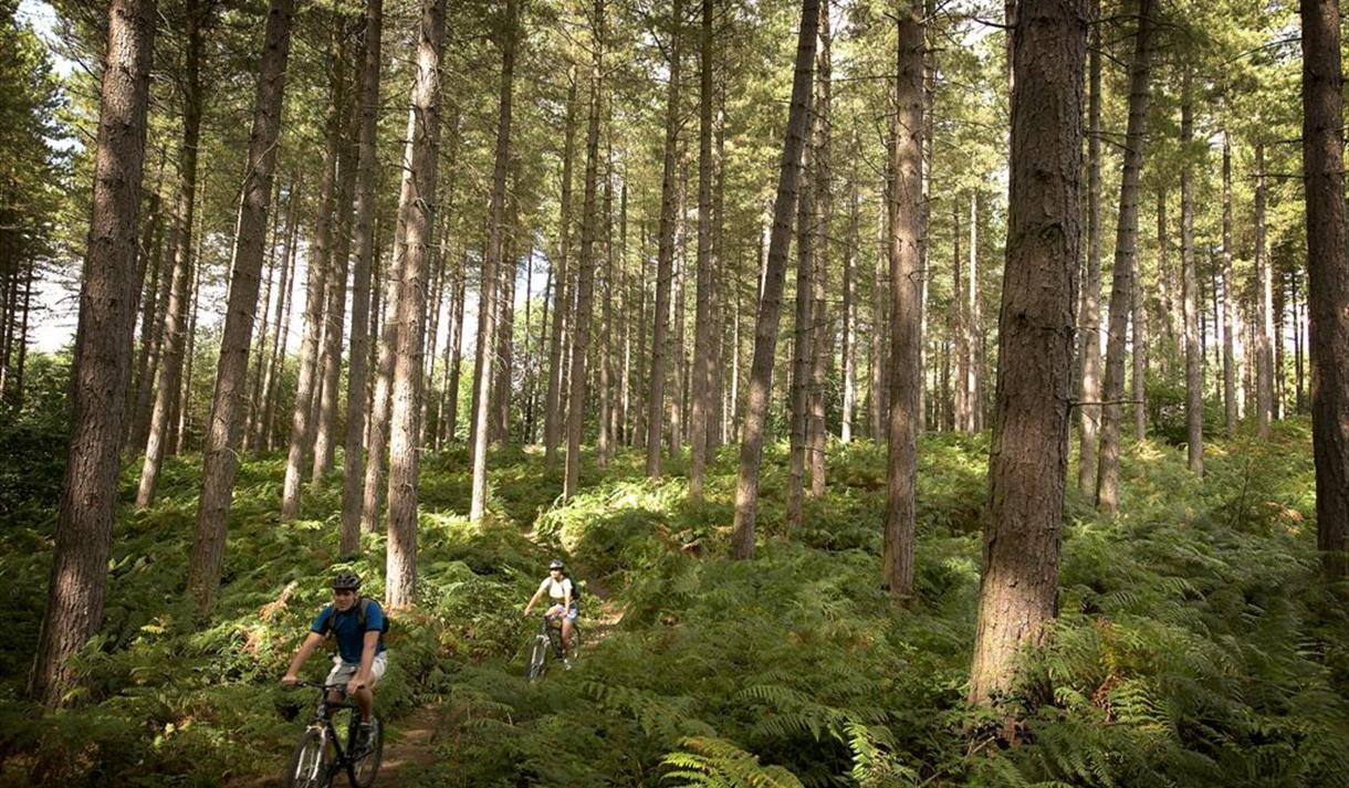 Sherwood Pines Mountain Bike Cycle Trails