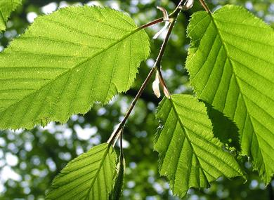 Learning about Trees – In association with the Woodland Trust