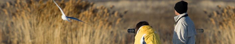 Wildlife & Birdwatching Image