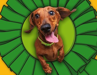 dog jumping through a rosette hoop