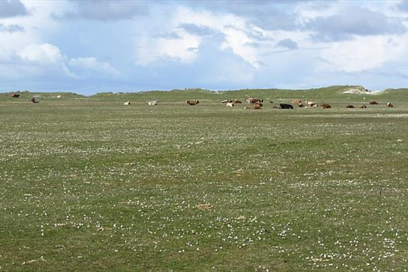 Bornish Beach and Machair