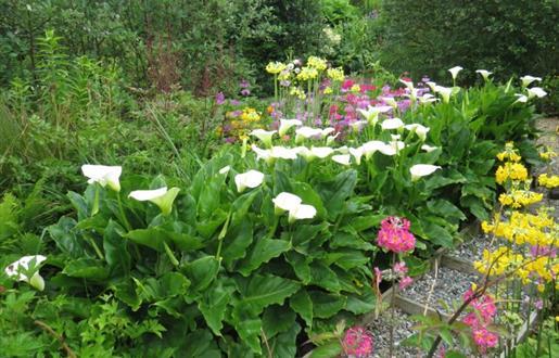 Leathad Ard Garden