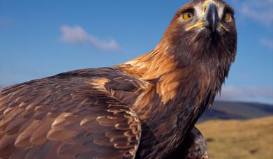 Golden Eagle - Kallin Harbour