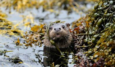 Otter - Peters Port
