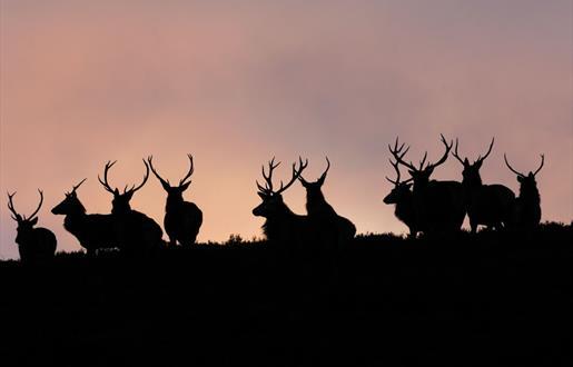 Red Deer - Glen Cravadale