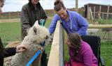 Petting an alpaca at Fairytale Farm
