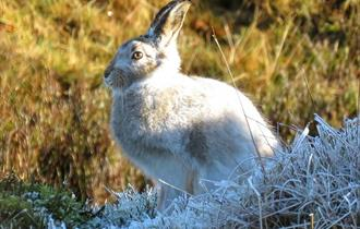 Mountain Hares Discovery Walk - Private Bespoke Group