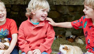 Children and guinea pigs at Chatsworth Farmyard