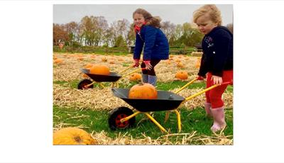 There's so much family fun to be had this October Half term at Matlock Farm Park with great Halloween activities