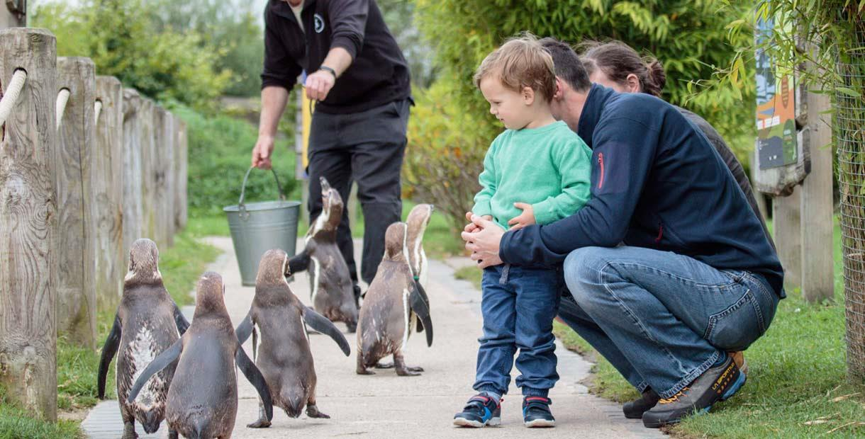 Walk with the Penguin's!
