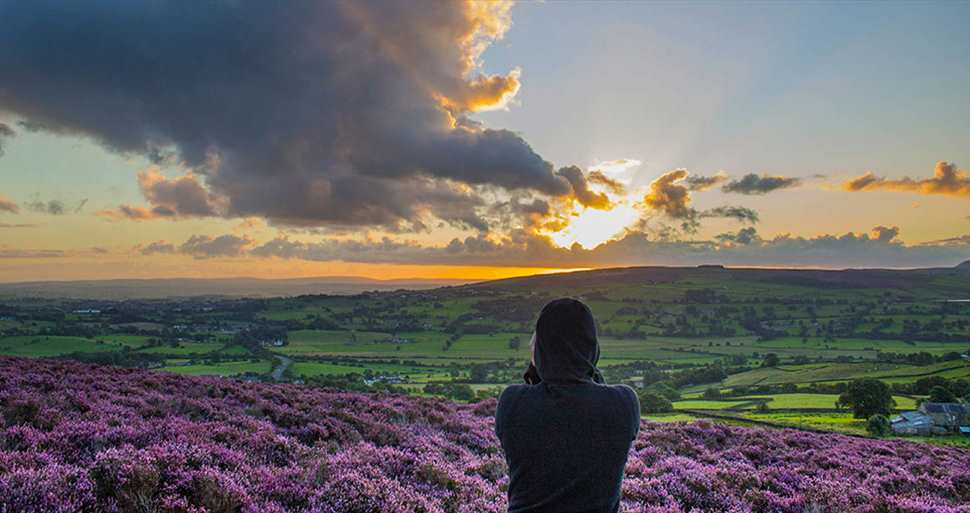 Panoramic Picture of Pendle countryside with heather