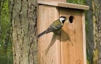 Birdbox stock image