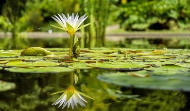 Pond stock