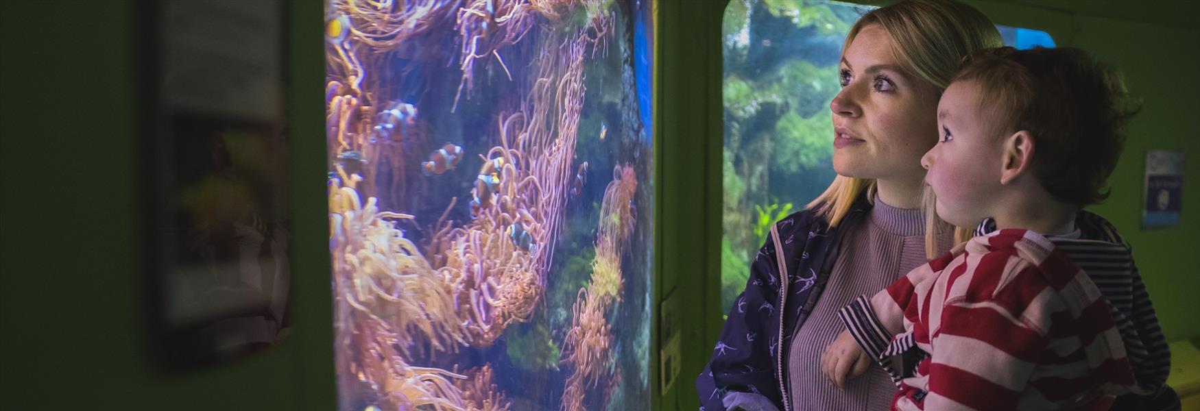 A family at the National Marine Aquarium Plymouth