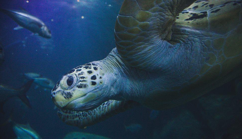 Close up of a Sea Turtle