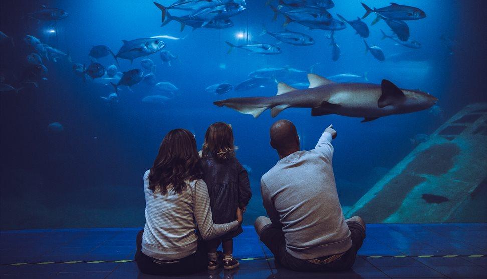 Quiet at the Aquarium