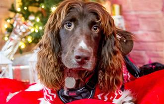 Doggy Christmas Market