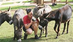 Trainer with donkeys