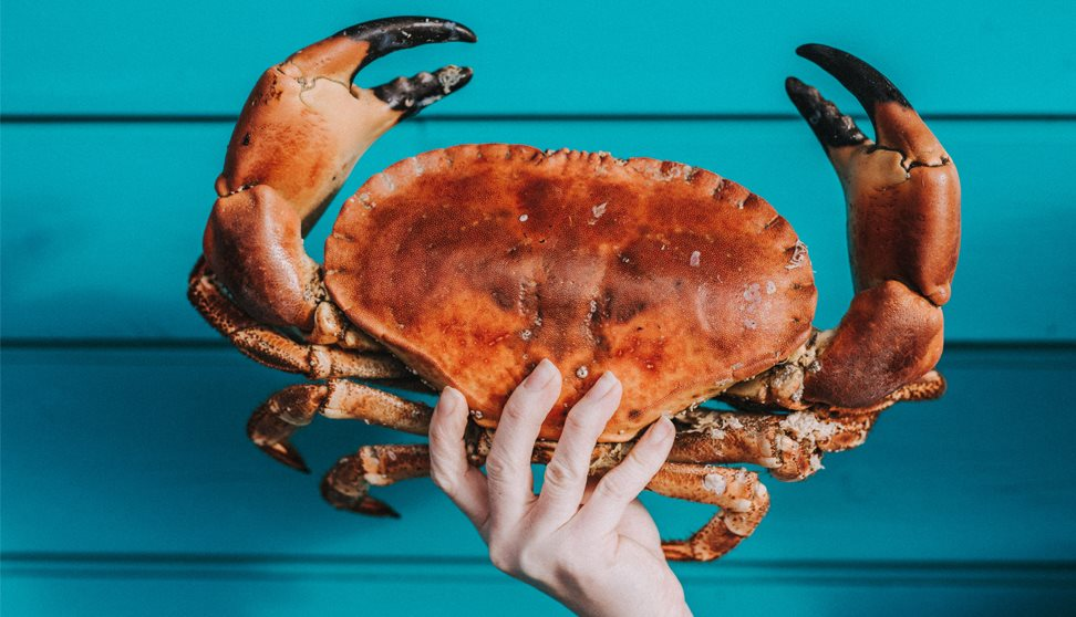 A hand holding a large crab against a blue painted fence