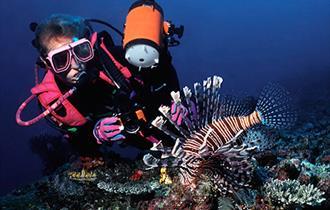Dive Scylla - National Marine Aquarium