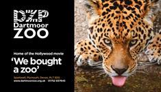Dartmoor Zoo advert with Leopard