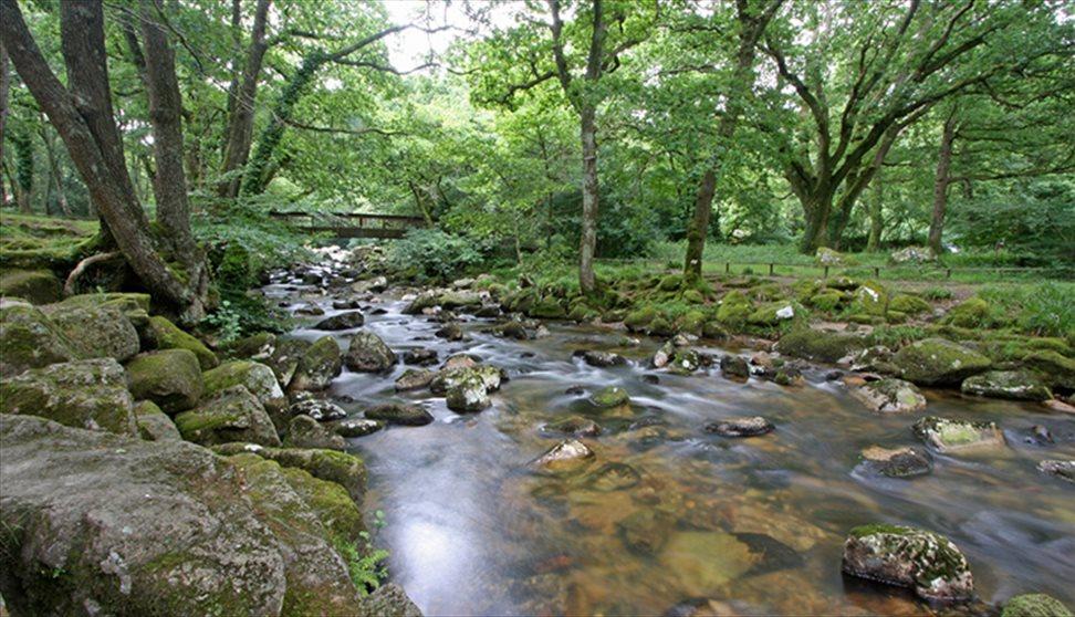 Dartmoor and walkers