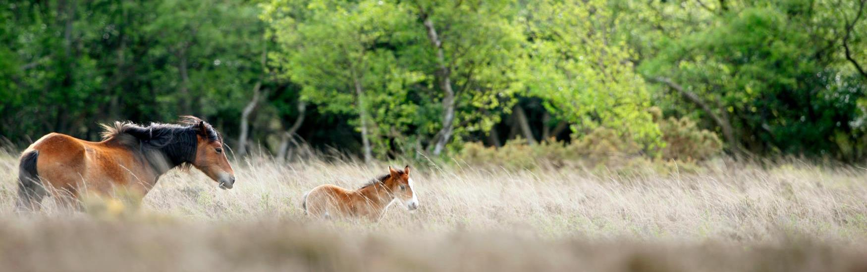 Visit the New Forest