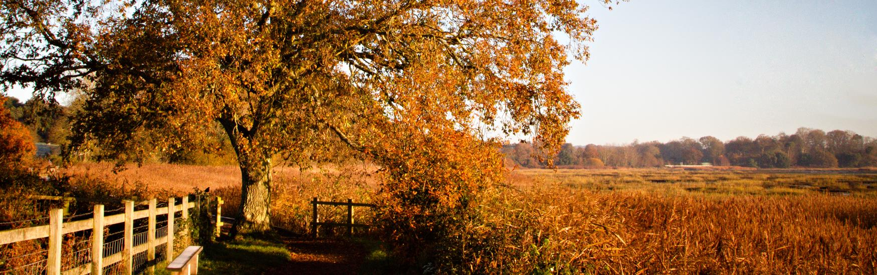 Autumn at Upton Country Park