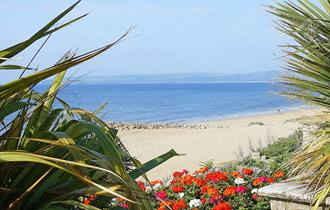 plants and brightly coloured red white pink  orange flowers framing the photo of the blue sea view