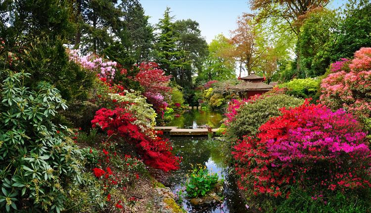 Wide shot of the beautiful bloom and lake at Compton Acres Japanese Garden