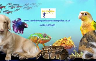colourful image of pets including sea animals.