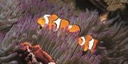 Blue Reef Clownfish Reef at portsmouth