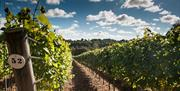 Hambledon vines