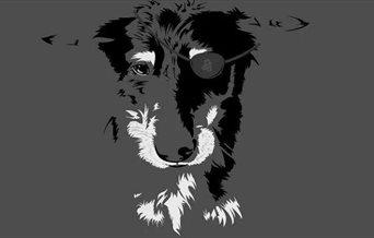 One Eyed Dog